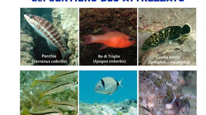 I pesci del sentiero blu