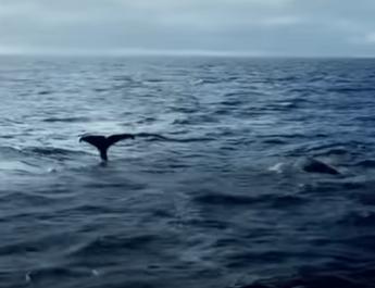 """Un fotogramma dello spot di Sky """"Un mare da salvare"""""""