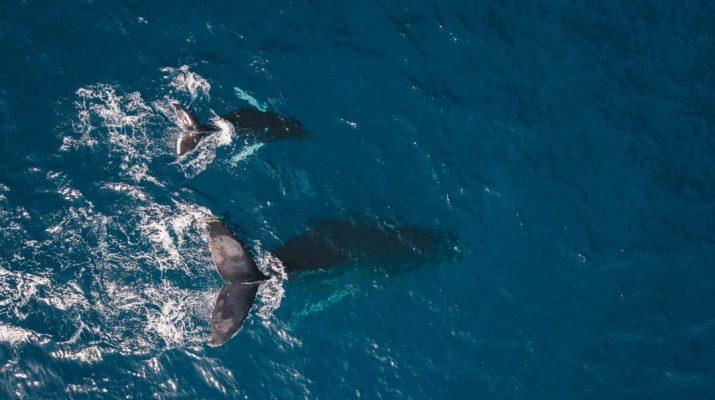 L'attivismo ambientale al tempo del Coronavirus: Il Pianeta Azzurro incontra Sea Shepherd Italia